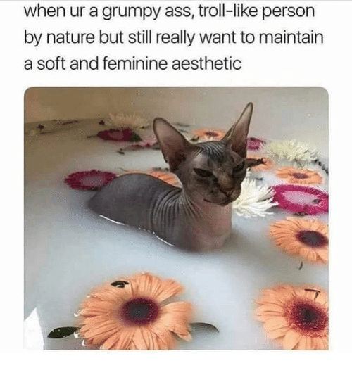 Ass, Memes, and Troll: when ur a grumpy ass, troll-like person  by nature but still really want to maintain  a soft and feminine aesthetic