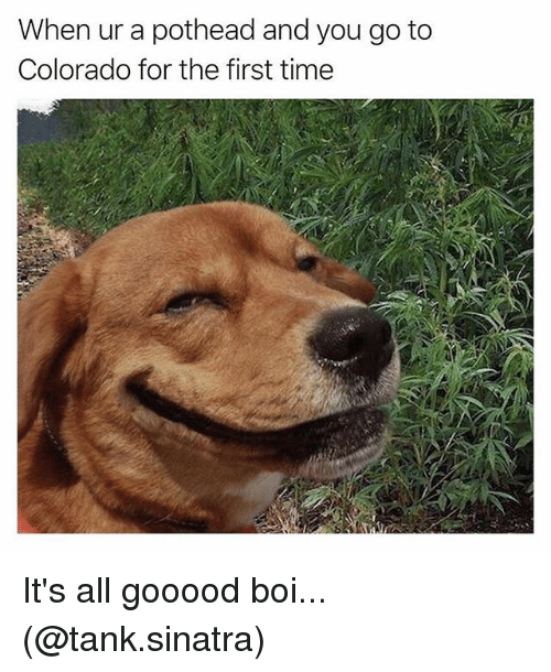 Memes, Colorado, and Time: When ur a pothead and you go to  Colorado for the first time It's all gooood boi... (@tank.sinatra)