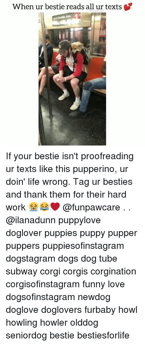 Corgi, Dogs, and Funny: When ur bestie reads all ur texts If your bestie isn't proofreading ur texts like this pupperino, ur doin' life wrong. Tag ur besties and thank them for their hard work 😭😂❤️ @funpawcare . . @ilanadunn puppylove doglover puppies puppy pupper puppers puppiesofinstagram dogstagram dogs dog tube subway corgi corgis corgination corgisofinstagram funny love dogsofinstagram newdog doglove doglovers furbaby howl howling howler olddog seniordog bestie bestiesforlife