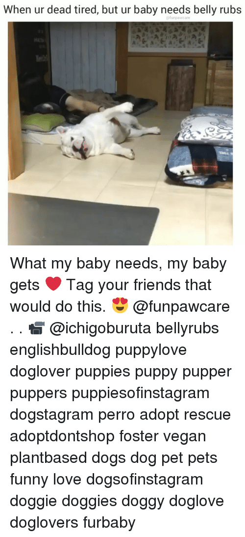Tag Your Friends: When ur dead tired, but ur baby needs belly rubs What my baby needs, my baby gets ❤️ Tag your friends that would do this. 😍 @funpawcare . . 📹 @ichigoburuta bellyrubs englishbulldog puppylove doglover puppies puppy pupper puppers puppiesofinstagram dogstagram perro adopt rescue adoptdontshop foster vegan plantbased dogs dog pet pets funny love dogsofinstagram doggie doggies doggy doglove doglovers furbaby