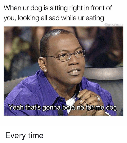 Memes, Yeah, and Time: When ur dog is sitting right in front of  you, looking all sad while ur eating  @tank.sinatra  Yeah that's gonna be a no for me dog Every time
