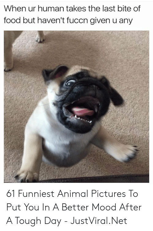 Food, Mood, and Animal: When ur human takes the last bite of  food but haven't fuccn given u any 61 Funniest Animal Pictures To Put You In A Better Mood After A Tough Day - JustViral.Net