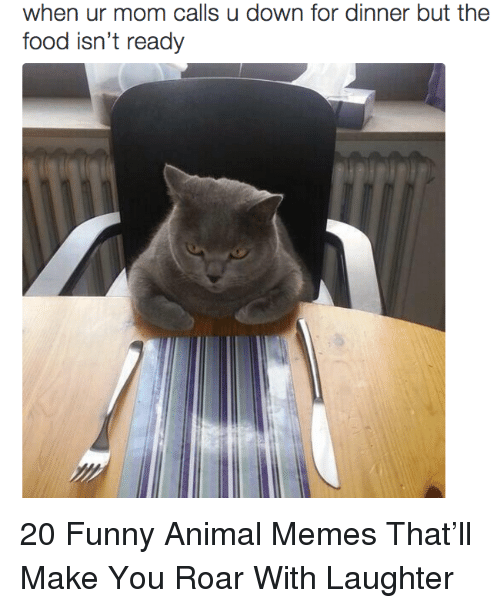 Food, Funny, and Memes: when ur mom calls u down for dinner but the  food isn't ready 20 Funny Animal Memes That'll Make You Roar With Laughter