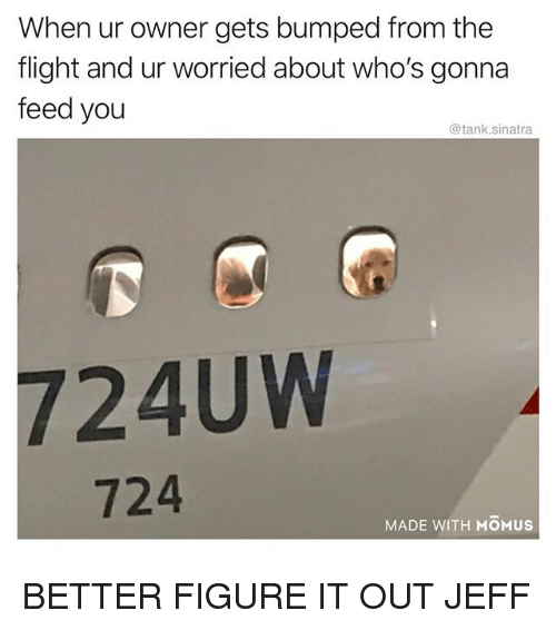 Funny, Flight, and Figure It Out: When ur owner gets bumped from the  flight and ur worried about who's gonna  feed you  @tank.sinatra  724UW  724  MADE WITH MOMUS BETTER FIGURE IT OUT JEFF
