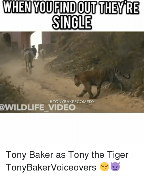 Bakerate: WHEN  VDUSNOMP  YOUFINDOUT  THEYRE  THEB  SINGLE  @TONYBAKERCOMEDY  @WILDLIFE VIDEO Tony Baker as Tony the Tiger TonyBakerVoiceovers 😏😈