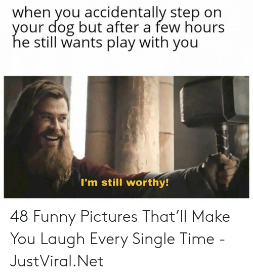 Funny, Pictures, and Time: when you accidentally step on  our dog but after a few hours  e still wants play with you  I'm still worthy! 48 Funny Pictures That'll Make You Laugh Every Single Time - JustViral.Net