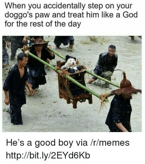 God, Memes, and Good: When you accidentally step on your  doggo's paw and treat him like a God  for the rest of the day He's a good boy via /r/memes http://bit.ly/2EYd6Kb