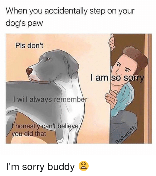 pawe: When you accidentally step on your  dog's paw  Pls don't  I am so sory  I will always remember  honestly can't believe  ou did that I'm sorry buddy 😩
