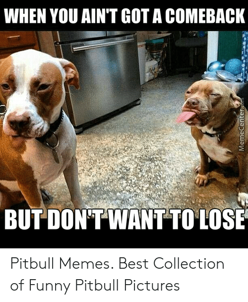 Funny Pitbull Pictures: WHEN YOU AIN'T GOT A COMEBACK  BUT DON'T WANT TO LOSE  MemeCenter.com Pitbull Memes. Best Collection of Funny Pitbull Pictures