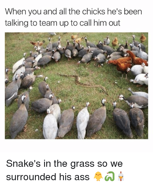 25 Best Memes About Snakes In The Grass Snakes In The Grass