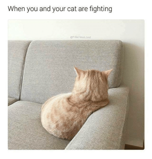 Ted, Hilarious, and Humans of Tumblr: When you and your cat are fighting  @hilarious.ted