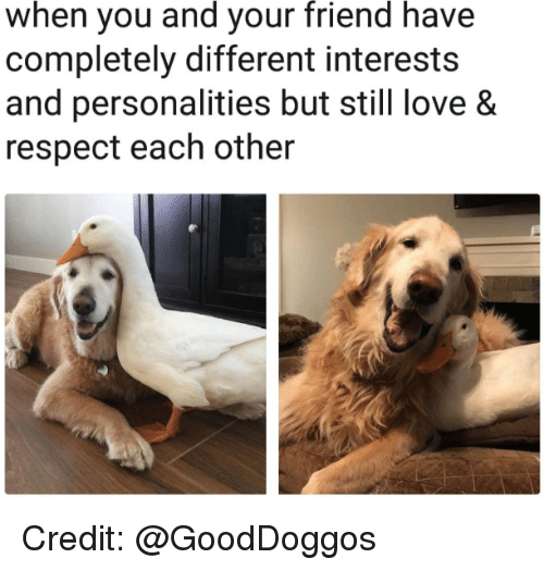 Love, Respect, and Friend: when you and your friend have  completely different interests  and personalities but still love &  respect each other Credit: @GoodDoggos