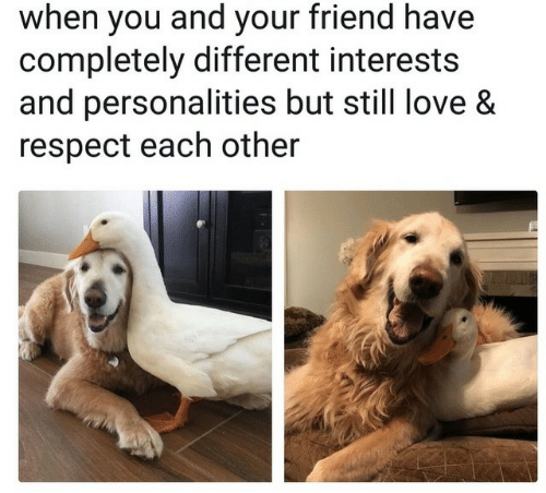 Love, Respect, and Friend: when you and your friend have  completely different interests  and personalities but still love &  respect each other