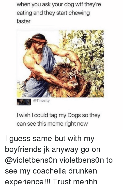 Coachella, Dogs, and Meme: when you ask your dog wtt they re  eating and they start chewing  faster  @Tinosity  I wish I could tag my Dogs so they  can see this meme right now I guess same but with my boyfriends jk anyway go on @violetbens0n violetbens0n to see my coachella drunken experience!!! Trust mehhh