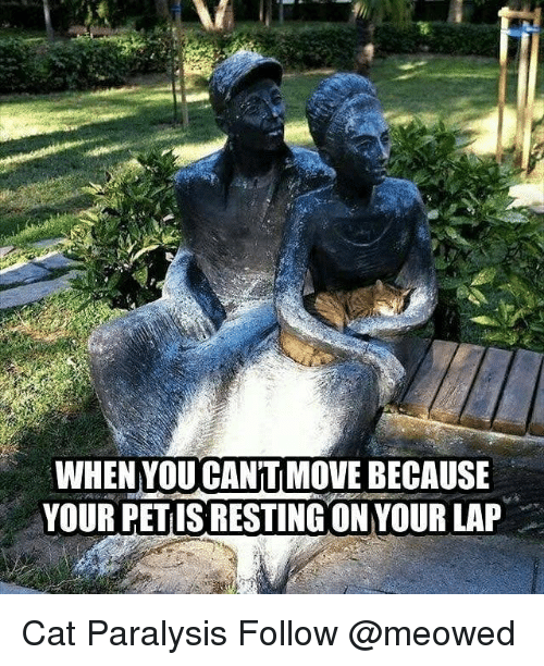 Memes, 🤖, and Cat: WHEN YOU CAN'TI MOVE BECAUSE  YOUR PETIS RESTING ON YOUR LAP Cat Paralysis Follow @meowed
