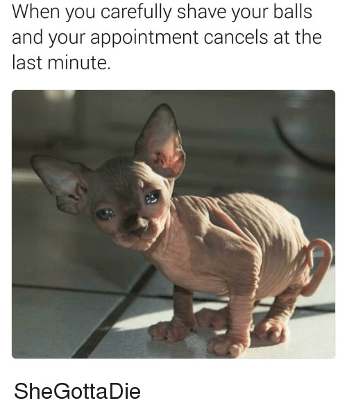 Dank Memes, You, and Last Minute: When you carefully shave your balls  and your appointment cancels at the  last minute. SheGottaDie