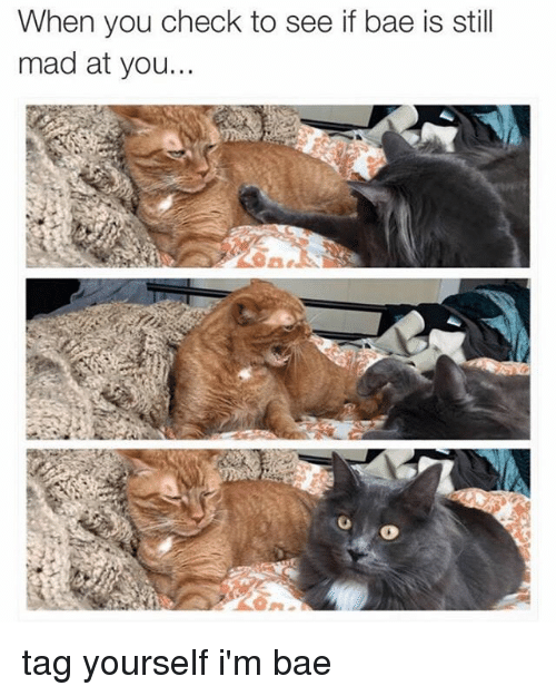 Bae, Memes, and Mad: When you check to see if bae is still  mad at you. tag yourself i'm bae