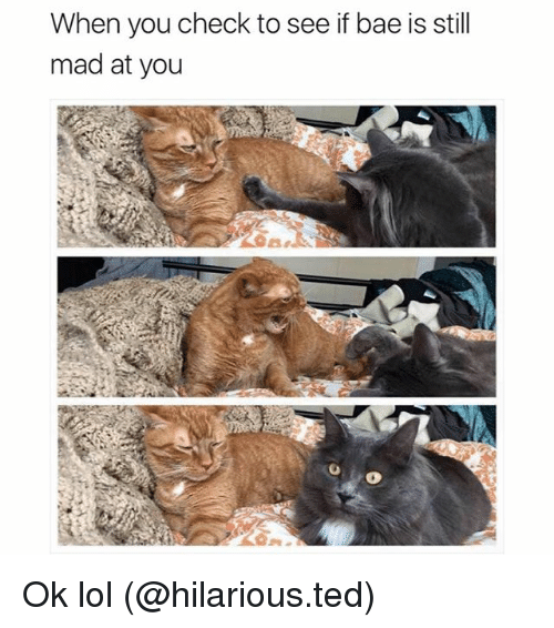 Bae, Funny, and Lol: When you check to see if bae is still  mad at you Ok lol (@hilarious.ted)
