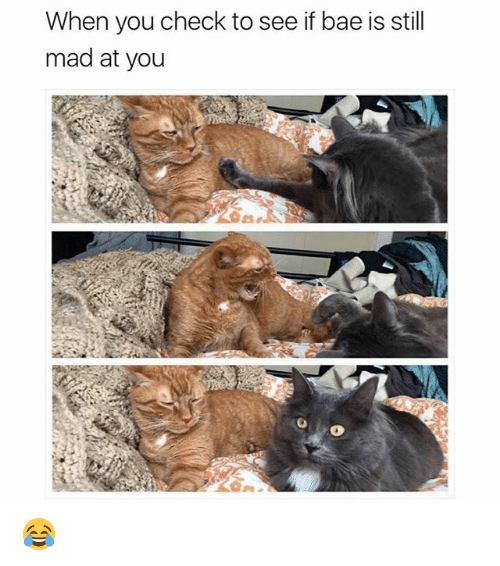Bae, Memes, and Mad: When you check to see if bae is still  mad at you 😂