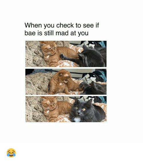 Bae, Memes, and Mad: When you check to see if  bae is still mad at you  0 😂
