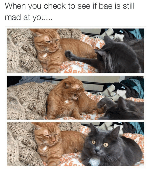 Bae, Mad, and Check: When you check to see if bae is still  mad at you...
