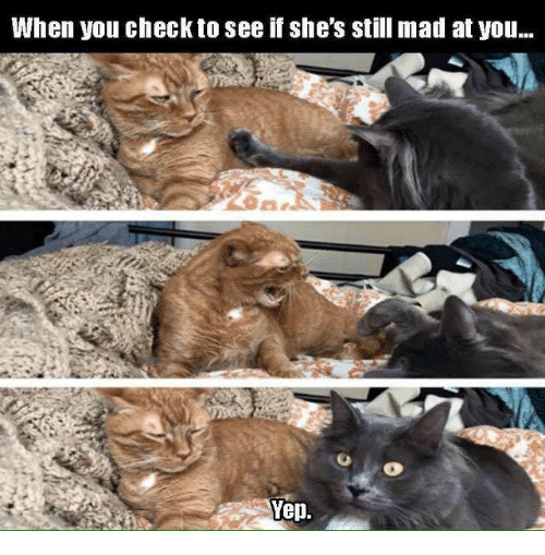 Memes, 🤖, and Yep: When you check to see if she's still mad at you...  Yep.