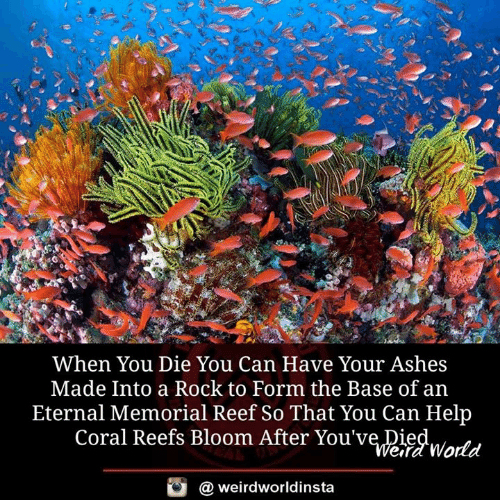 coral: When You Die You Can Have Your Ashes  Made Into a Rock to Form the Base of an  Eternal Memorial Reef So That You Can Help  Coral Reefs Bloom After You've Died  ITt  efd World  @ weirdworldinsta