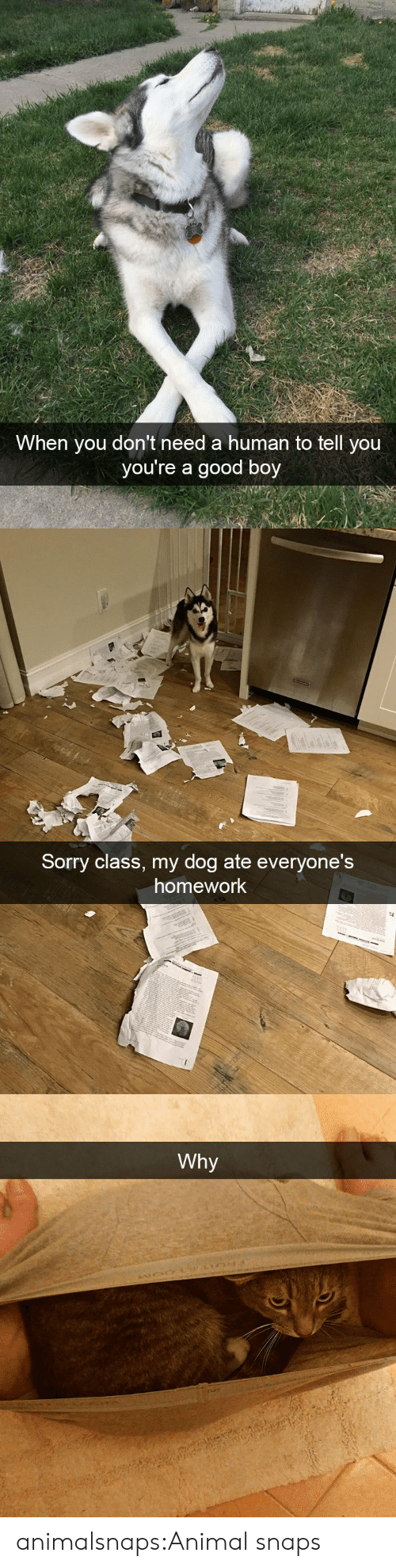 Sorry, Target, and Tumblr: When you don't need a human to tell you  you're a good boy   Sorry class, my do  g ate everyone's  homework   Why animalsnaps:Animal snaps