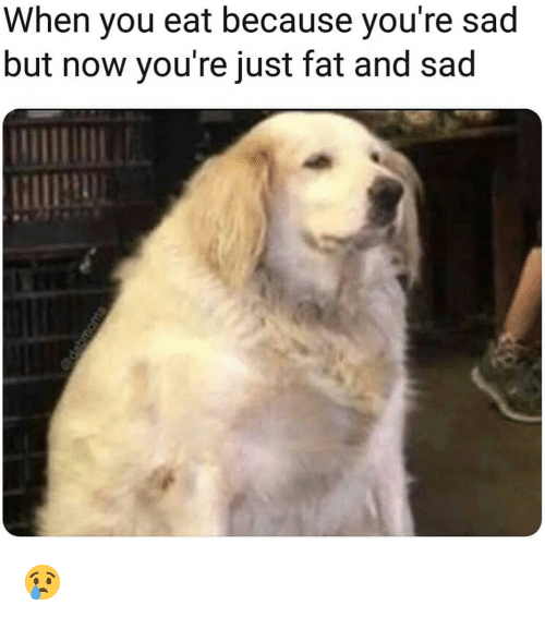 Funny, Fat, and Sad: When you eat because you're sad  but now you're just fat and sad 😢