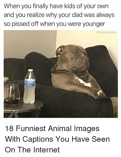 Funniest Animal: When you finally have kids of your own  and you realize why your dad was always  so pissed off when you were younger  @tank.sinatra 18 Funniest Animal Images With Captions You Have Seen On The Internet