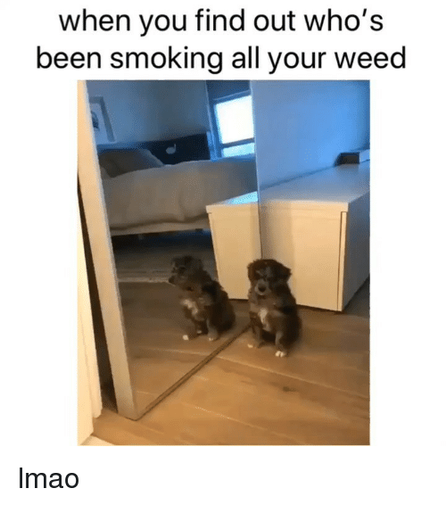 Lmao, Smoking, and Weed: when you find out who's  been smoking all your weed lmao