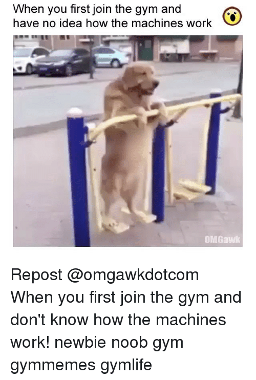 noobness: When you first join the gym and  have no idea how the machines work  OMGawk Repost @omgawkdotcom ・・・ When you first join the gym and don't know how the machines work! newbie noob gym gymmemes gymlife