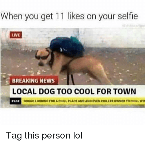 Chill, Funny, and Lol: When you get 11 likes on your selfie  LIVE  BREAKING NEWS  LOCAL DOG TO00 COOL FOR TOWN  DO0GO LOOKING FOR A CHILL PLACE AND AND EVEN CHİLuER OWNE  TO CHILL WIT Tag this person lol