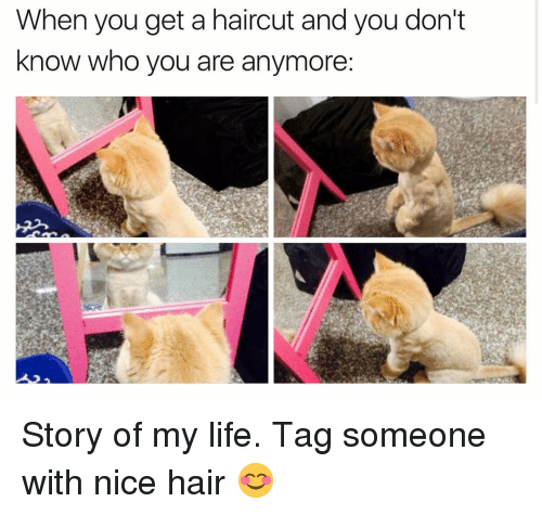 Haircut, Memes, and Haircuts: When you get a haircut and you don't  know who you are anymore Story of my life. Tag someone with nice hair 😊