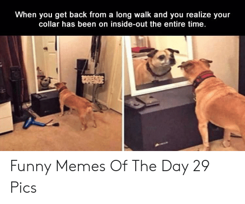 memes of the day: When you get back from a long walk and you realize your  collar has been on inside-out the entire time. Funny Memes Of The Day 29 Pics