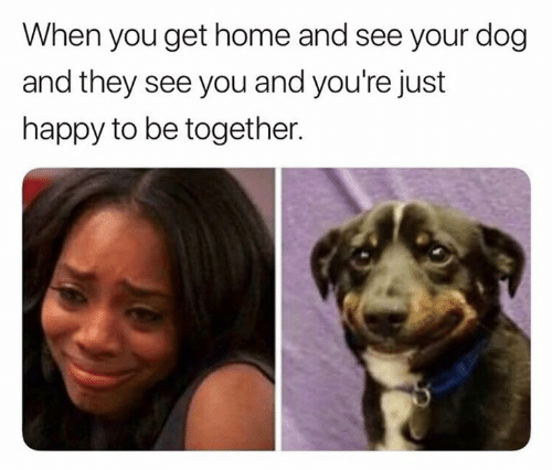 Happy, Home, and Dog: When you get home and see your dog  and they see you and you're just  happy to be together.