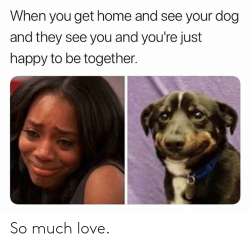 Dank, Love, and Happy: When you get home and see your dog  and they see you and you're just  happy to be together. So much love.