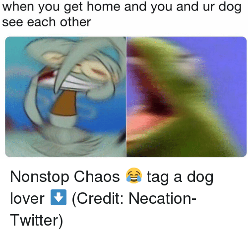 nonstop: when you get home and you and ur dog  see each other Nonstop Chaos 😂 tag a dog lover ⬇️ (Credit: Necation-Twitter)