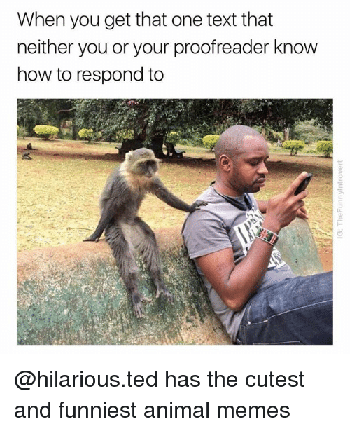 Funniest Animal: When you get that one text that  neither you or your proofreader know  how to respond to @hilarious.ted has the cutest and funniest animal memes