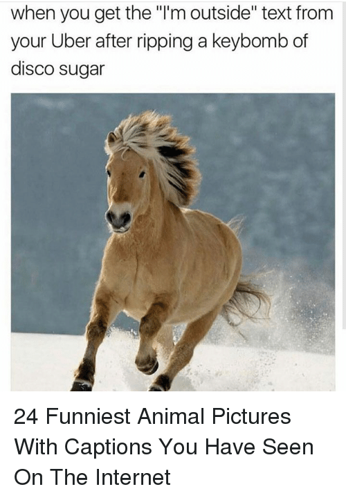 """Funniest Animal: when you get the """"l'm outside"""" text from  your Uber after ripping a keybomb of  disco sugar 24 Funniest Animal Pictures With Captions You Have Seen On The Internet"""