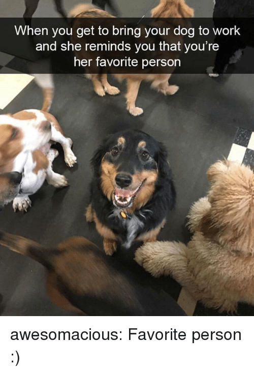 Tumblr, Work, and Blog: When you get to bring your dog to work  and she reminds you that you're  her favorite person awesomacious:  Favorite person :)