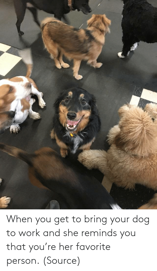 Work: When you get to bring your dog to work and she reminds you that you're her favorite person. (Source)