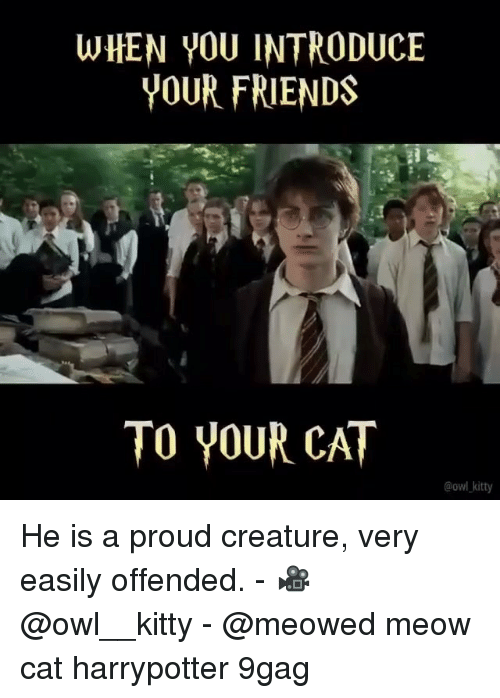 harrypotter: WHEN YOU INTRODUCE  YOUR FRIENDS  TO YOUR CAT  @owl kitty He is a proud creature, very easily offended. - 🎥 @owl__kitty - @meowed meow cat harrypotter 9gag