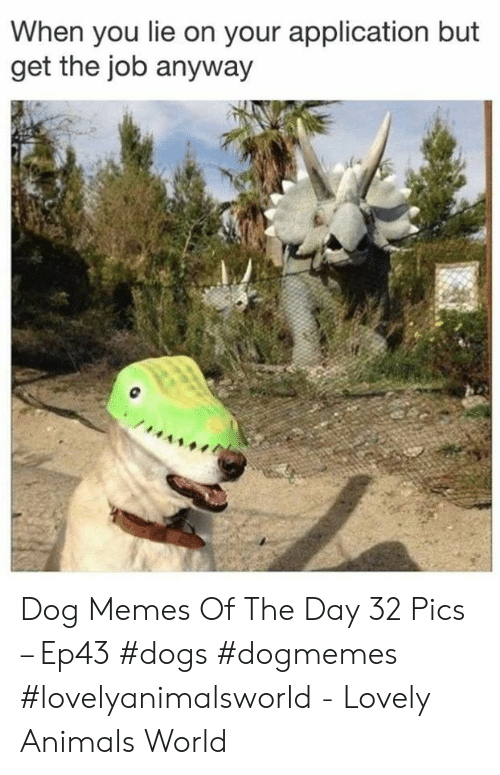 Get The Job: When you lie on your application but  get the job anyway Dog Memes Of The Day 32 Pics – Ep43 #dogs #dogmemes #lovelyanimalsworld - Lovely Animals World