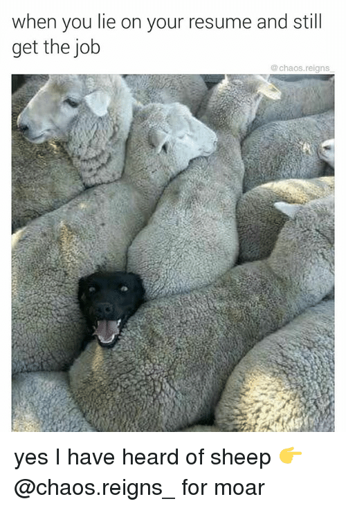 When You Lie On Your Resume: when you lie on your resume and still  get the job  @ chaos.reigns yes I have heard of sheep 👉 @chaos.reigns_ for moar