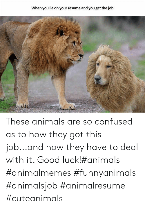 Resume: When you lie on your resume and you get the job These animals are so confused as to how they got this job...and now they have to deal with it. Good luck!#animals #animalmemes #funnyanimals #animalsjob #animalresume #cuteanimals