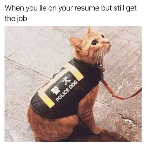 Resume: When you lie on your resume but still get  the job  POLICE DOG