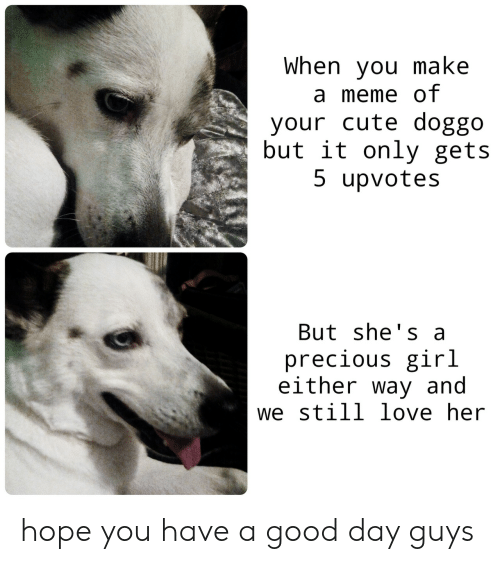 Cute, Love, and Meme: When you make  a meme of  your cute doggo  but it only gets  5 upvotes  But she's a  precious girl  either way and  we still love her hope you have a good day guys