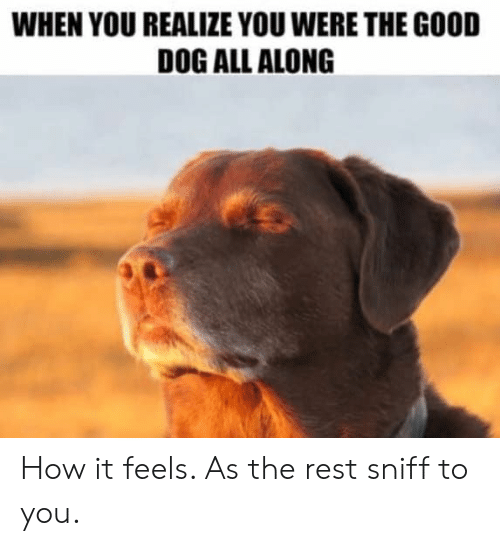 How It Feels: WHEN YOU REALIZE YOU WERE THE GOOD  DOG ALL ALONG How it feels.  As the rest sniff to you.