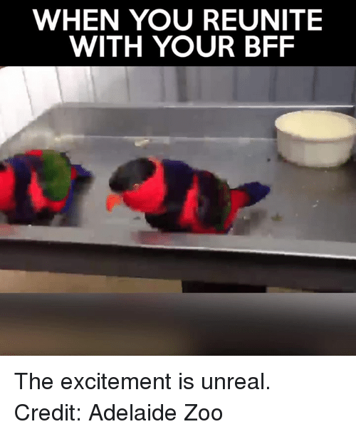 Unrealism: WHEN YOU REUNITE  WITH YOUR BFF The excitement is unreal.   Credit: Adelaide Zoo